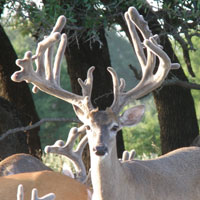 Star Valley Ranch - Trophy Whitetails